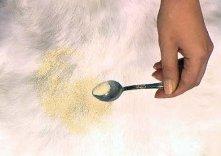 Как почистить белый мех от желтизны в домашних условиях.